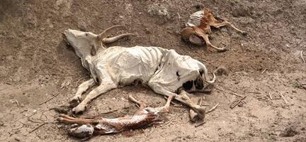Etiyopya Son Yılların En Şiddetli Kuraklığını Yaşıyor