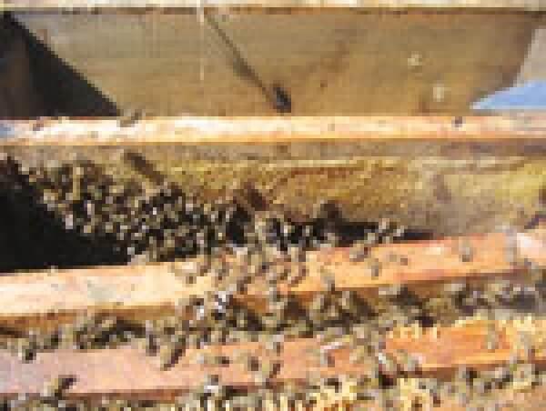Aydınlılar Arılarına Kavuştu