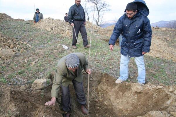 Kışladere Köyü'ne Kiraz Fidanları