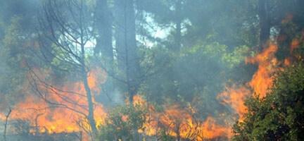 Ayvacık'taki Orman Yangını Önemli Ölçüde Kontrol Altına Alındı
