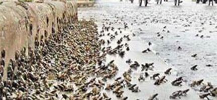 Çin'deki 7.8'lik Depremden Önce Kurbağalar Kaçmış