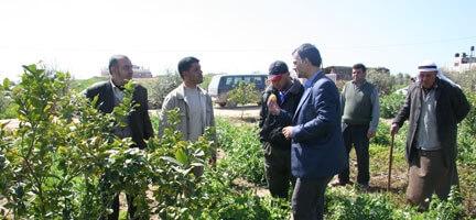 Gazze'de Ağaçlar Meyve Verdi