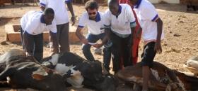 Adak Kurbanlarınız Somali'de Kesildi