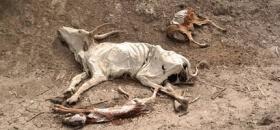 Severe drought again in Ethiopia
