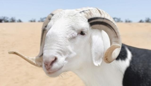 Sacrificial Animal Donation in Turkey